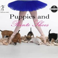 Puppies and Pointe Shoes